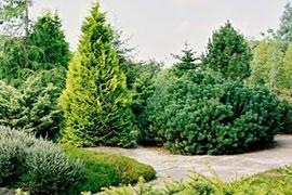 Крупногабаритное озеленение